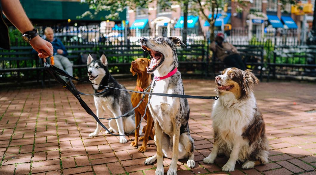 Milo Pet Management